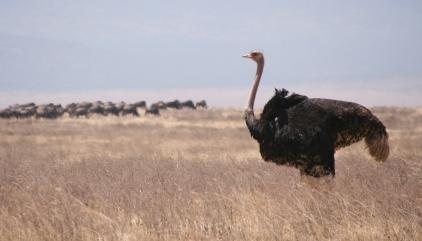 EMU/Ngorongoro.