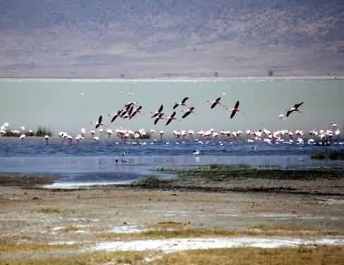 NGORONGORO-KRATERET: Flamingoer ved innsjøen i det berømte krateret i Tanzania.