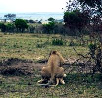 KENYA: Safari 2007. Naturens gang.